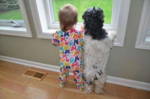 köpekle camdan dışarı bakan bebek