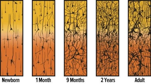 beyin gelişim grafiği