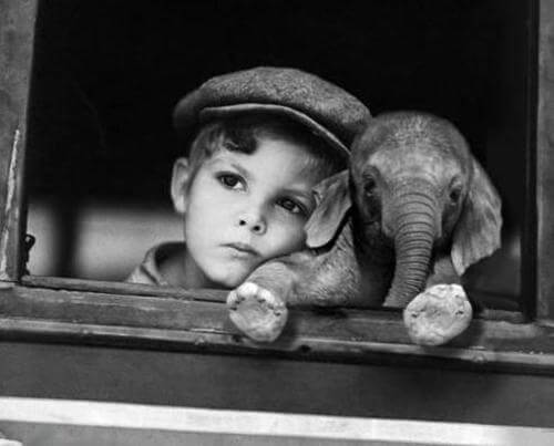 küçük çocuk ve yavru fil