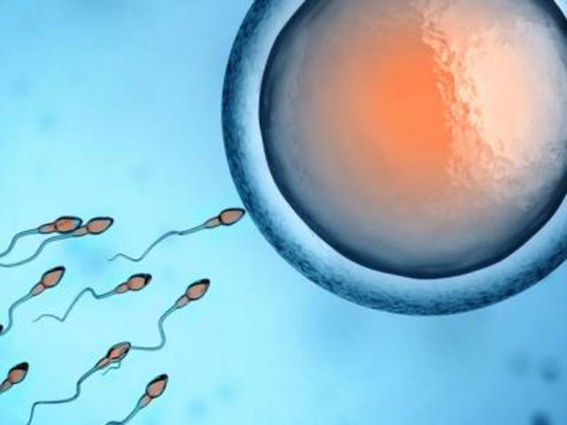 spermler