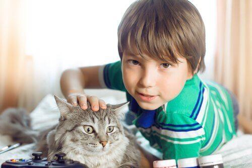 kedinin başını okşayan çocuk