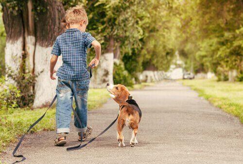 elinde tasma olan çocuk ve ona bakan köpek