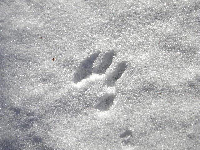 karda ayak izleri