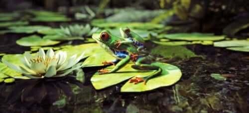 Anne ve yavru kurbağa