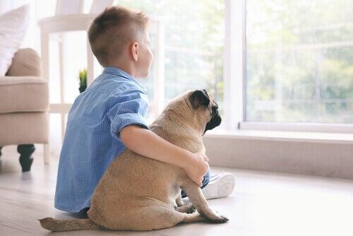 Terapi Hayvanları Çocuklara Nasıl Yardım Edebilir?