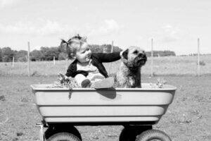 Araba içindeki bebek ve köpek