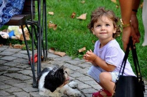 Bebek ve köpek
