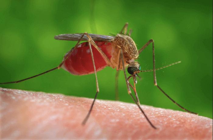Batı Nil Virüsü Gebeliği Nasıl Etkiler?
