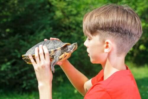 Kaplumbağa Tekniği ve Çocuklarda Özgüven