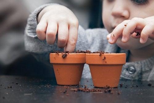 Çocuğunuzla Birlikte Çekirdekten Meyve Ağacı Yetiştirmek