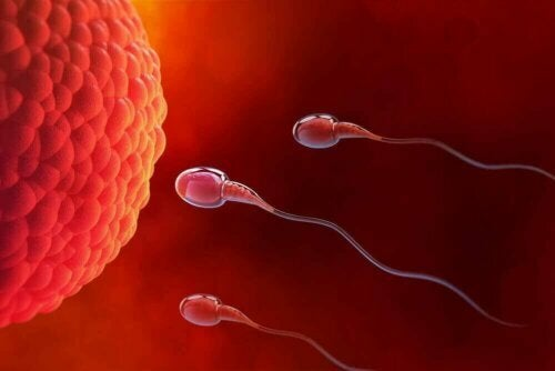 yumurta ve sperm