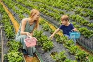 Annesiyle sebze toplamak için gayret eden çocuk