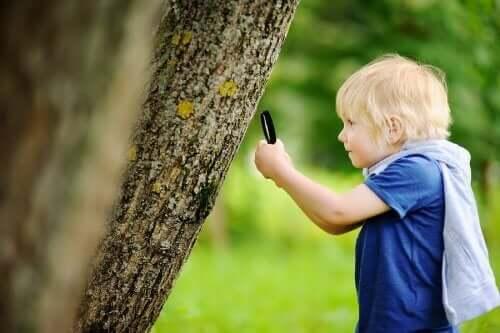 ağaç büyüteç çocuk