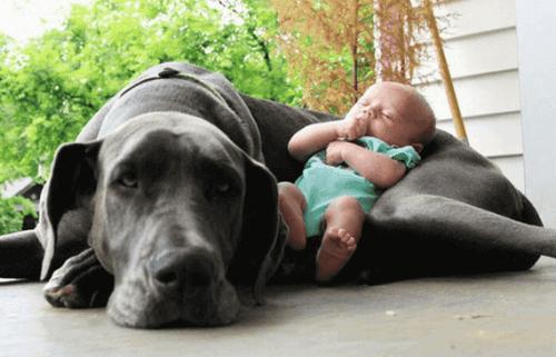 köpekler ve bebekler